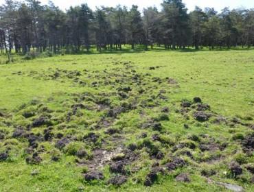 Unións pide que se prolongue a tempada de caza do xabaril para evitar danos na agricultura