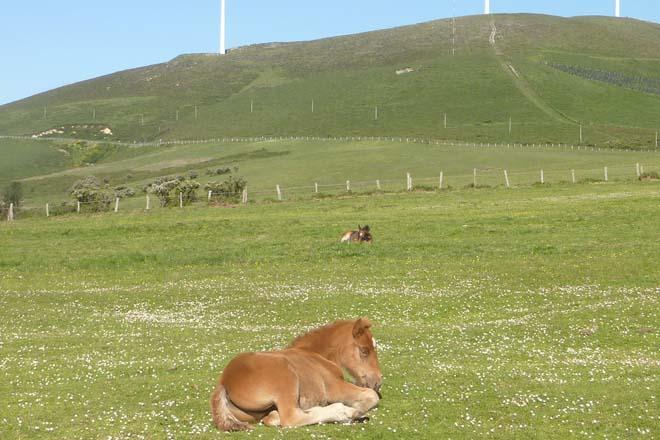 Xornada sobre as posibilidades da Serra do Xistral para a produción de mel e carne