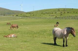 Jornada sobre las posibilidades de la Sierra del Xistral para la producción de miel y carne