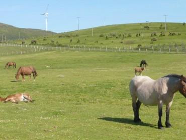 A Deputación de Lugo promove o aproveitamento sostible da riqueza ambiental da Serra do Xistral