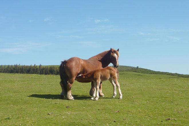 Desarrollada íntegramente dende Galicia unha nova gama de alimentación para cabalos