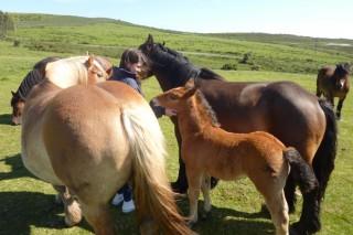 Exaltación de la carne de potro y del ganado caballar este fin de semana en Muras