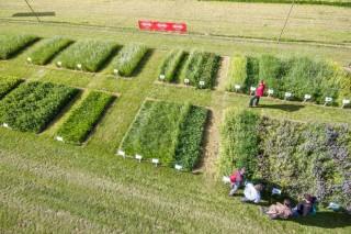 Cales son os últimos avances na produción de herba en Europa?