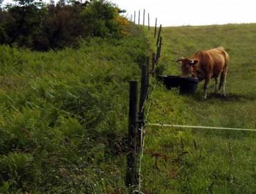 Catastro ten mal identificada a propiedade dun 30% das terras rústicas de Galicia