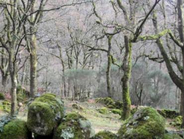Primeiros sete montes inscritos no Rexistro de Masas Consolidadas de Frondosas Autóctonas de Galicia