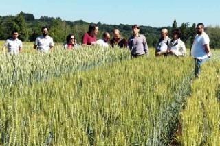 As novas variedades de cereais de inverno, a exame