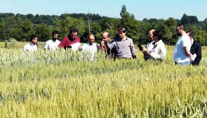 Las nuevas variedades de cereales de invierno, a examen