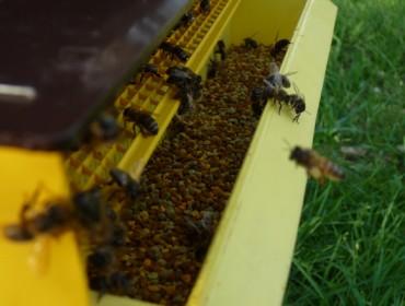 Curso sobre recolección e uso de própole en apicultura