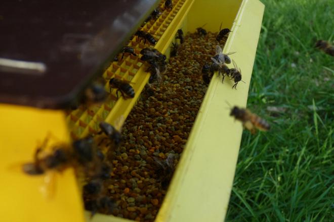 Curso sobre recolección y uso de propóleo en apicultura