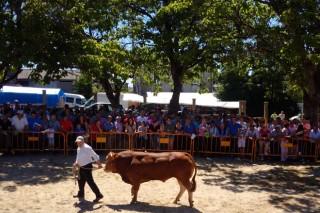 Poxa e Concurso de raza Rubia Galega este sábado en Adai