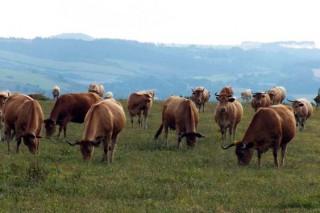 O agro fai balance de danos pola crise do coronavirus