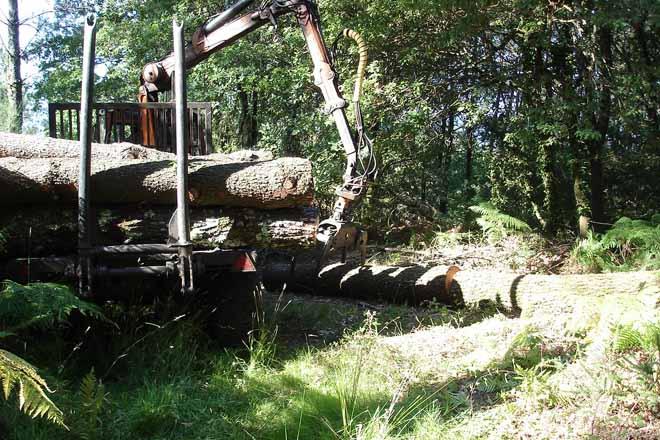 Autorizacións de cortas na área afectada polo nematodo do piñeiro