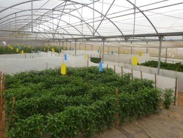 Mabegondo incorporará unha vintena de variedades autóctonas de hortalizas e cereais ó seu Banco de Xermoplasma