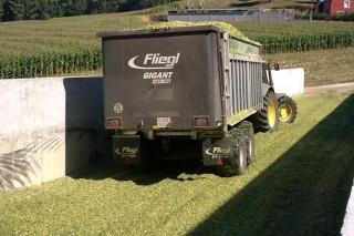 Consellos para o ensilado do millo (II):  o deterioro aeróbico do silo