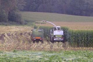 Consellos para un bo ensilado do millo: o momento de corte