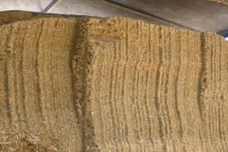 Cando se recomenda empezar o silo de millo?