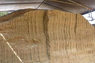 Consellos para o ensilado do millo (III): como reducir o deterioro da forraxe