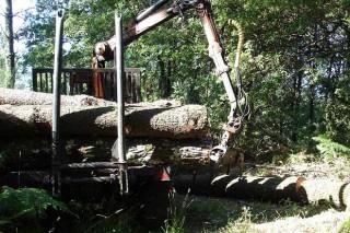 Simplificados os permisos de corta coa autorización forestal única