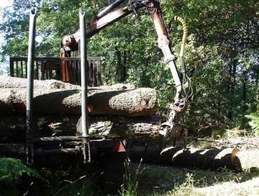 Simplificados los permisos de tala con la autorización forestal única
