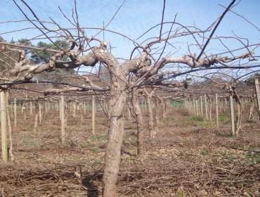 Areeiro recomenda tratar os cultivos ante a suba das temperaturas