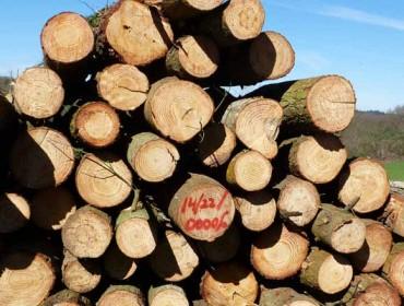 As empresas forestais fórmanse en tecnoloxías móbiles