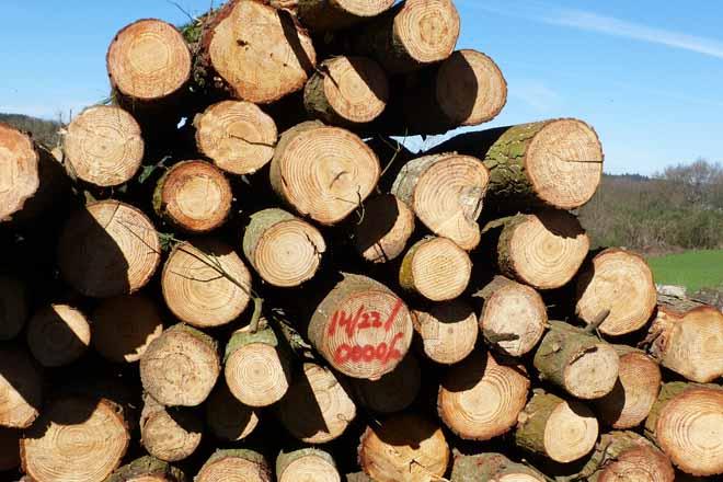 Requerimentos de madeira da industria galega de taboleiro