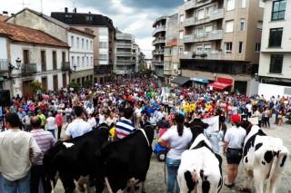 O sector gandeiro fai unha nova demostración de forza en Lalín