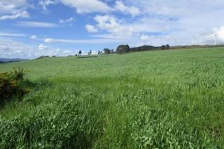 Implantación e mantemento de pradeiras en zonas abandonadas (I): preparación do terreo