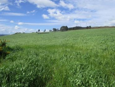 Recomendacións para un bo abonado das pradeiras en primavera