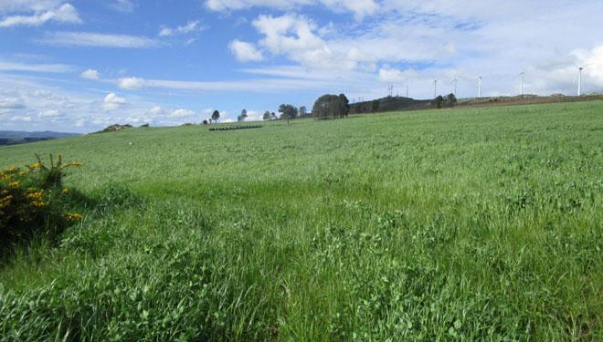Implantación y mantenimiento de praderas en zonas abandonadas (I): preparación del terreno