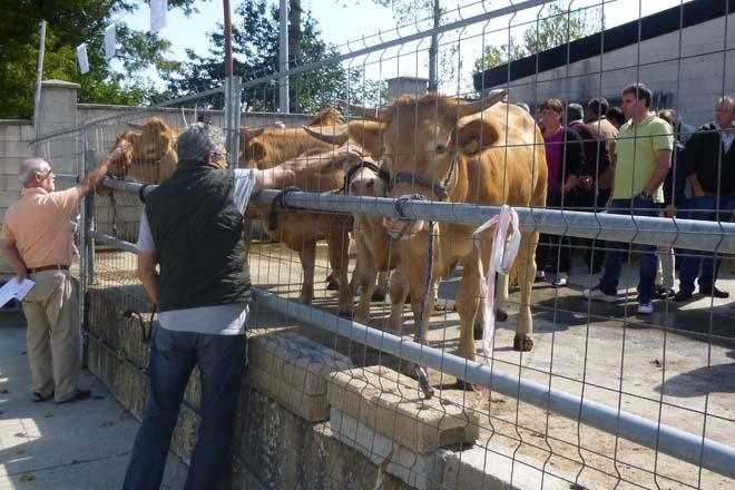 Las novillas de Rubia Galega se subastaron en Pedrafita a una media de 2.137 euros