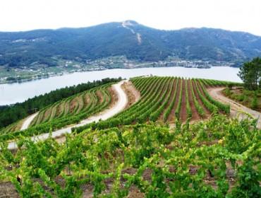 Viticultura en tempos de corentena…