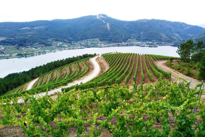 O Sindicato Labrego pide medidas de apoio para o sector do viño