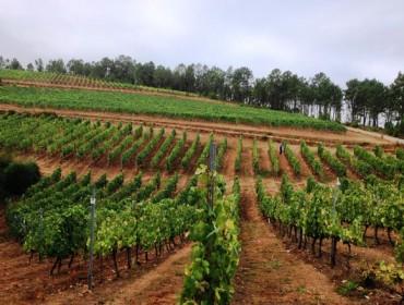 Publicada a lista de beneficiarios das axudas para reestruturación e reconversión de viñedo