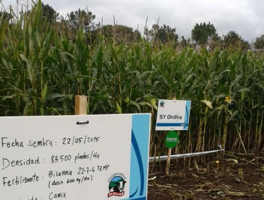 Delagro forma a cooperativas de Asturias, Cantabria e Galicia para maximizar o rendemento do millo