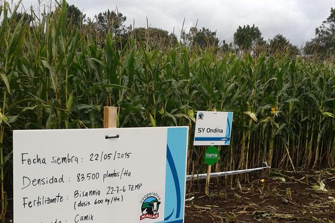 Delagro forma a cooperativas de Asturias, Cantabria y Galicia para maximizar el rendimiento del maíz