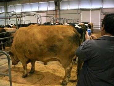 Asaja prevé a exportación de carne e lácteos galegos a Indonesia