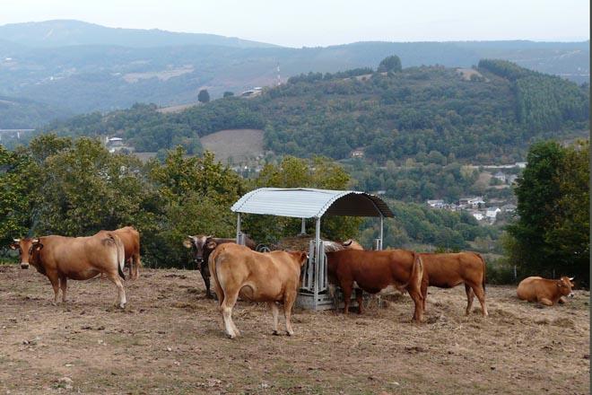 Medio Rural anuncia o pago de 15 millóns de euros ós gandeiros en zonas con limitacións naturais