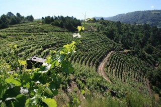 Xornada sobre viticultura na Semana Verde de Galicia