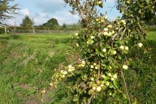 """O 2017 preséntase como un ano """"excelente"""" para produción de mazá"""