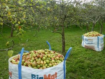Curso sobre como poñer en marcha unha plantación de árbores froiteiras en Galicia