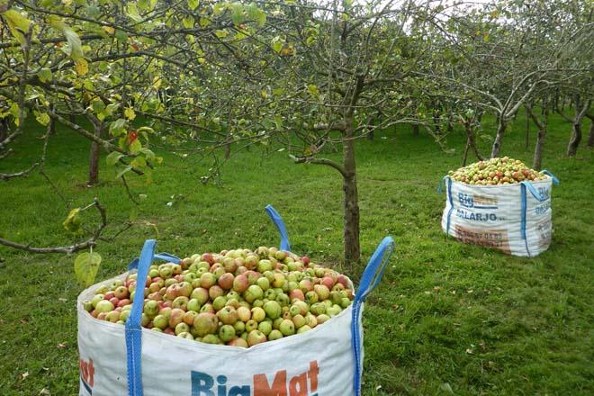 ¿Cuánto cuesta producir manzana de sidra en ecológico en Galicia?