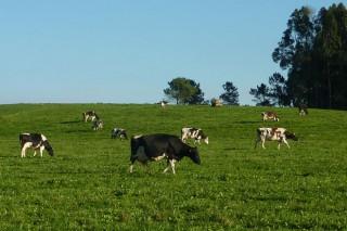 A produción láctea continúa en retroceso por terceiro mes consecutivo
