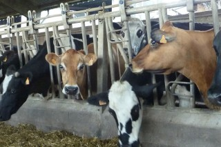 Vías para aumentar a facturación dunha gandería sen producir máis leite