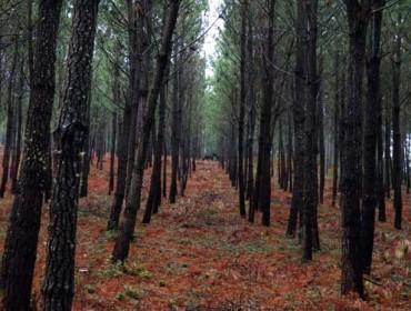 O monte galego absorbe o 30% dos gases de efecto invernadoiro emitidos en Galicia