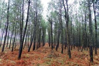Ampliado o prazo de solicitude das axudas de reforestación e de tratamentos silvícolas