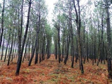 Medio Rural aproba este xoves a resolución das axudas de silvicultura
