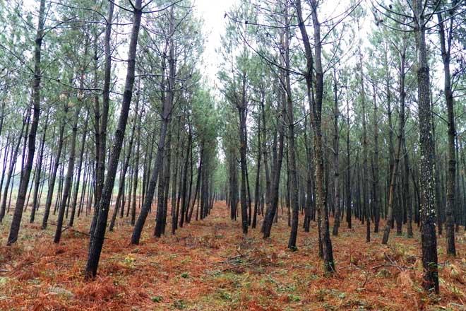 Que pasou cos obxectivos do Plan Forestal do 1992?