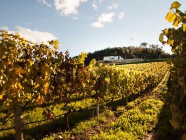 Cuidados del viñedo al finalizar la vendimia: mildiu, enfermedades de la madera y abonado