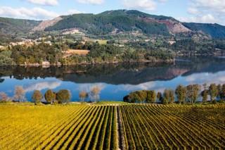 Axudas da Xunta para a promoción do viño galego fóra da UE